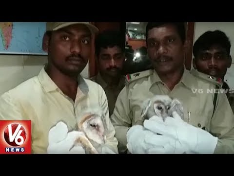 Forest Officials Clarifies Over Mysterious Birds In Vizag Says Its Barn Owls | V6 News