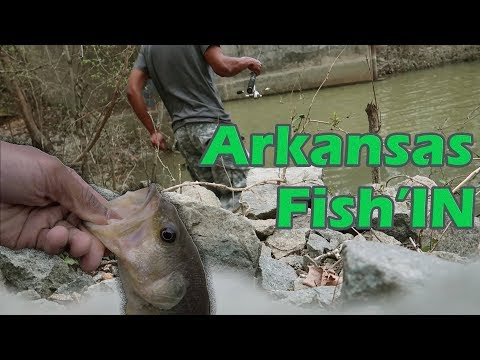 Arkansas Creek Fishing ( FROM THE BANK )