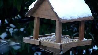 Garden Birds Feeding On A Bird Table
