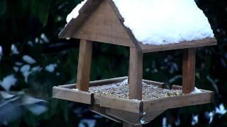 Garden Birds Feeding On A Bird Table