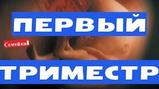 ПЕРВЫЙ ТРИМЕСТР беременности. Беременность на ранних сроках. Что можно. Замершая беременность