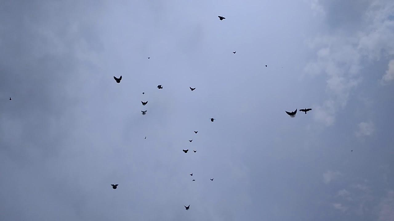 верну николаевские голуби ютуб раз должен был