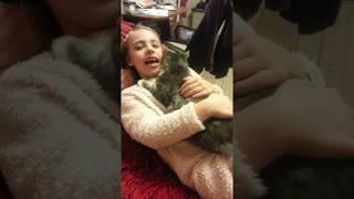 Наша кошка мяукает под песенку , смешное видео ! (Животнолюбам не смотреть!)