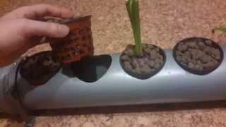 Гидропонная установка DWC из пластиковых труб. Часть 3(Очень люблю комнатные растения. В основном лиственные. Решил построить своими руками гидропонную установк..., 2015-03-28T18:32:58.000Z)