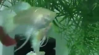 . Аквариум рыбки(Аква стиль - Aqua style . Аквариум рыбки Миллионы рыбок : ) Теги: аквариум, аквариумы, рыбки, аквариумные рыбки,..., 2016-06-13T08:47:26.000Z)