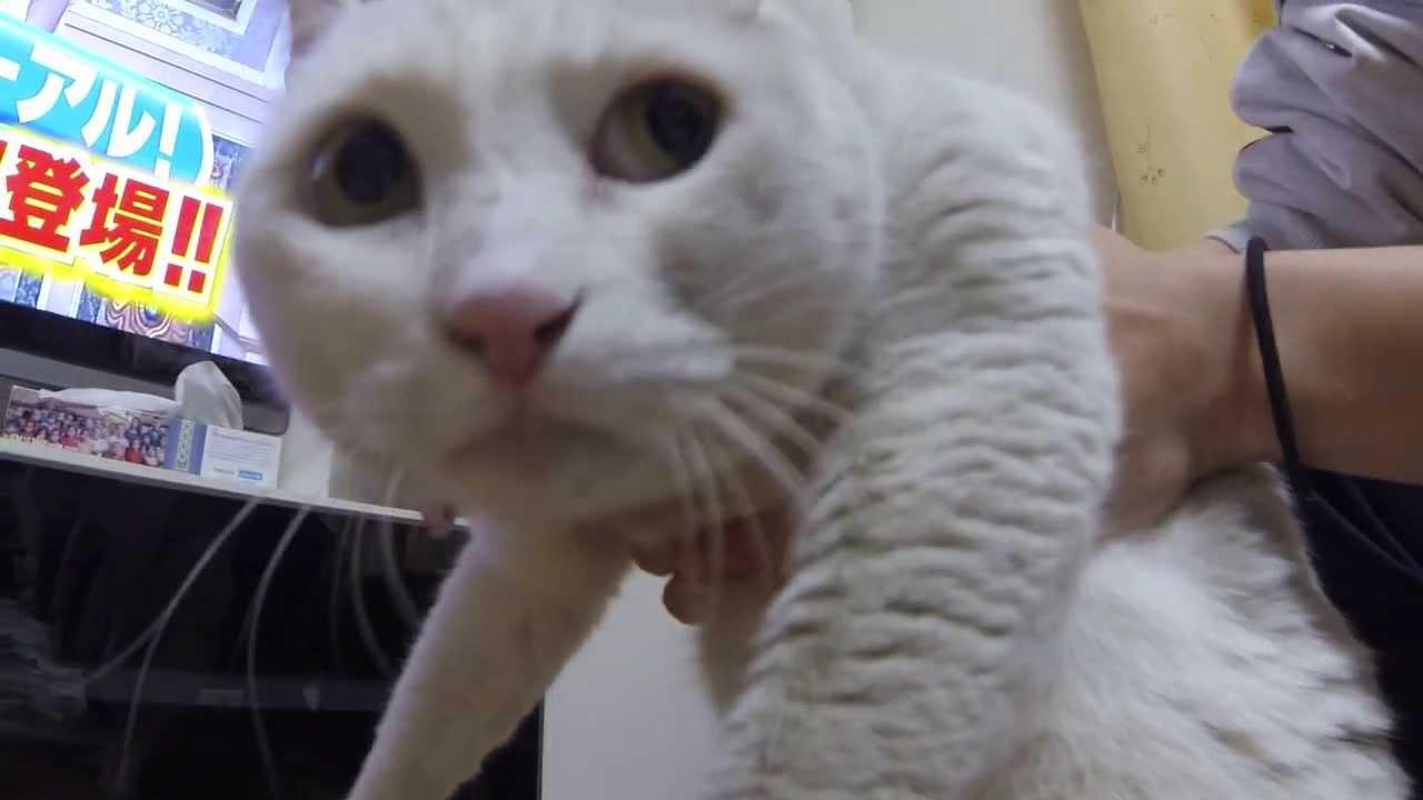 うちの白猫、チロを風呂に ...