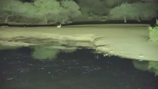 Pete's Pond Live Stream
