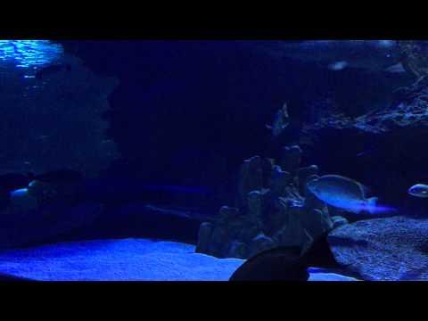 Aquaria KLCC (01693)