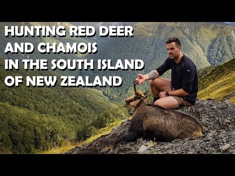 Hunting Chamois And Red Deer In New Zealand