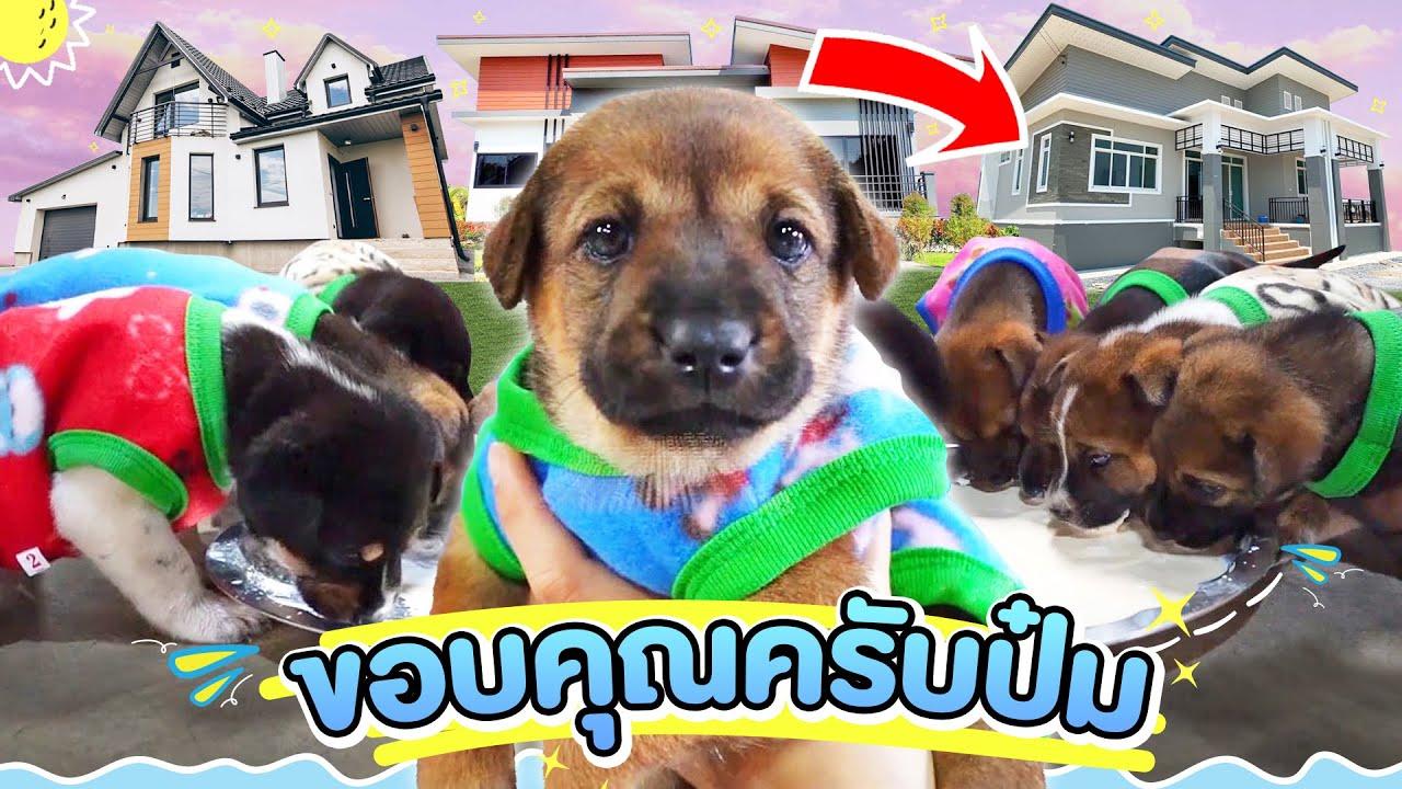 จุดเริ่มต้นใหม่ของลูกหมาจร!? จากวันแรกที่หลบฝนหลบหนาว..จนได้บ้านที่อบอุ่น (โชคดีนะลูกๆ)