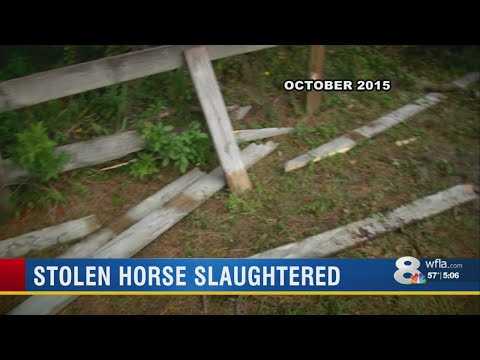 Andi and Kenny  - Stolen Horse Found Slaughtered for Its Meat, Deputies Say