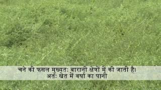 चने की खेती के लिए भूमि का चुनाव व तैयारी - Field selection & preparation for Chickpeas farming