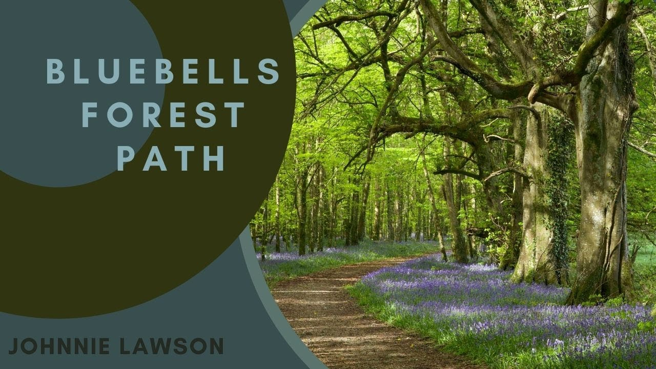 download calming forest picture - photo #25