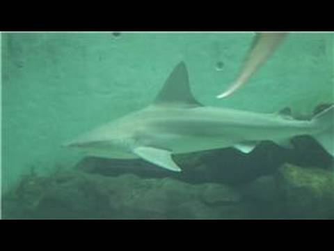 Marine Life : What Is The Habitat Of The Shark?