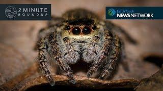 New ghost scorpion, duck-billed dinosaur & the world's oldest eye