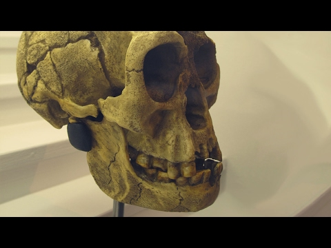Great Beasts of Legend: The Hobbits of Flores Island:  Myth, Magic, Majesty of Homo floresiensis