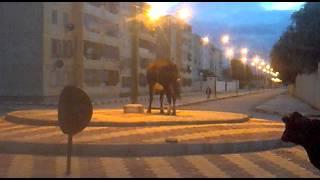 la vache qui fait le jour et la nuit