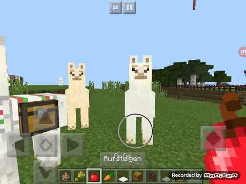 was essen lamas bei minecraft