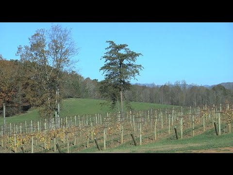Family Winemaking Tradition Leads To Successful Gilmer County Winery