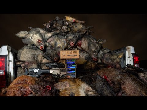 HOG HUNTING with THERMAL NIGHT VISION | 100 HOGS DOWN | Pulsar Trail XP 50 & 38