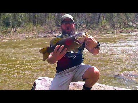 GIANT CHEAT RIVER SMALLMOUTH Bass Fishing PB Smallmouth Bass 3lb14oz 18.5in RUNCL Titan 1