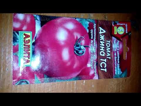 Вопрос: Сорт томата Джина . В чём особенности этого сорта?