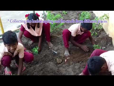 Herbal Garden in School Campus, PUMS, Bodipalayam