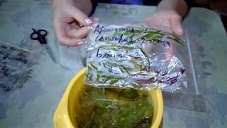 Купить живые аквариумные растения в интернет магазине