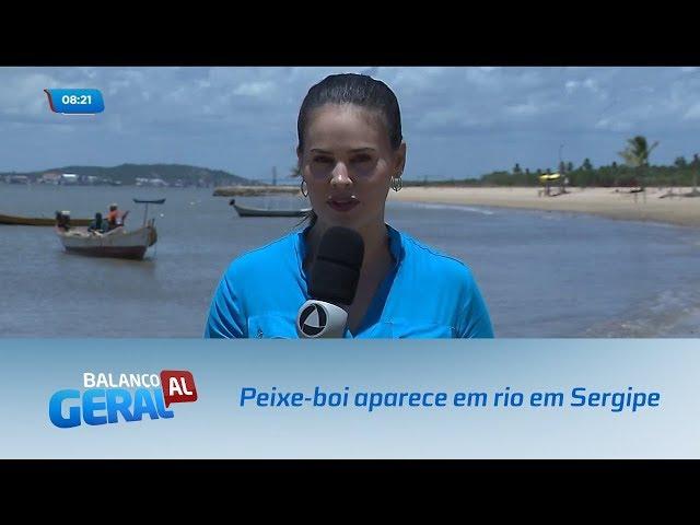 Peixe-boi visto pela primeira vez em Alagoas reaparece em rio no estado de Sergipe