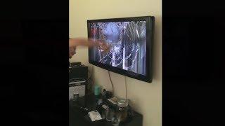 kid dies in fortnite battle royale, breaks his tv..