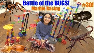Battle of the BUGS Marble Racing Elimination Tournament! Kids