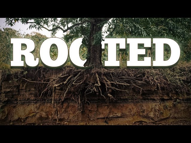 Deeply Rooted In God's Word | July 28, 2019