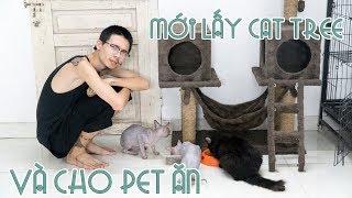 Cat tree mới cho mèo - Quan điểm về việc ăn thịt chó mèo và cho bò sát ăn| WILDVN TV