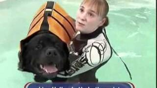 Dog Recovers From Injury Swimming At Mypetstop Manchester