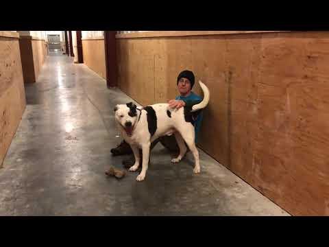 adopt-this-dog!-kc-pet-project's-leo
