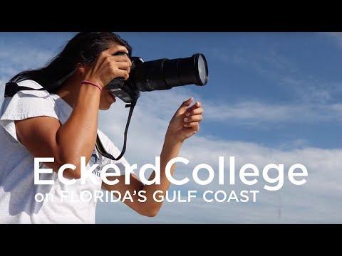 Summer Internships for Eckerd College students at Mote Marine Laboratory