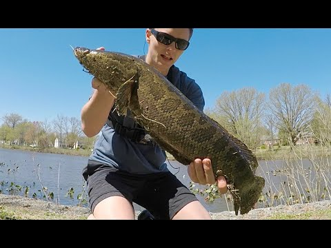 CRAZY SNAKEHEAD Surprise In NJ -- ( KILL Or RELEASE?? )