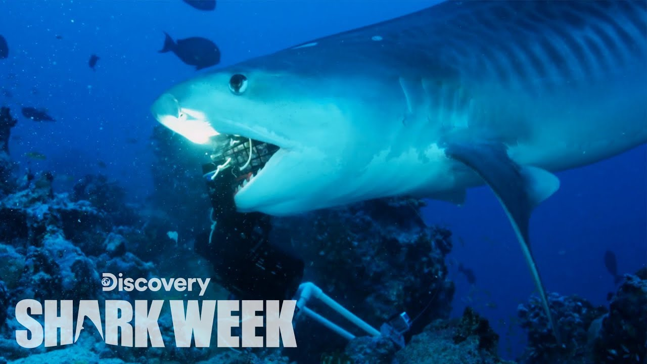 Shark Week Is This Week. Here's Everything That's Playing.