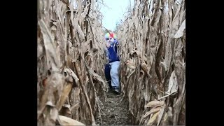 clown chases me in a cornfield... (HELP)