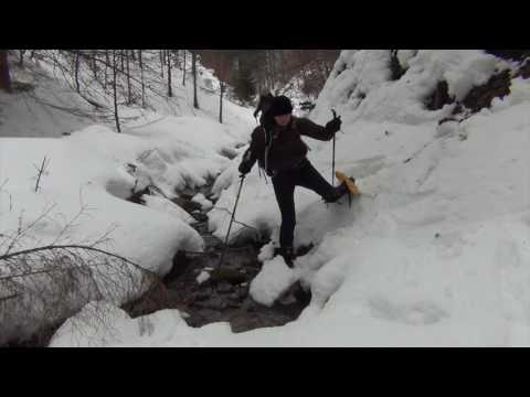 Tracking Wolves, Bears & Lynx In Slovakia