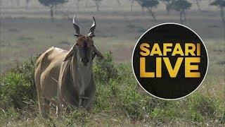 safariLIVE - Sunset Safari - August 14, 2018 thumbnail