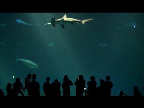 Amazing Monterey Bay Aquarium In California