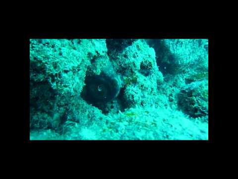 under celebes sea