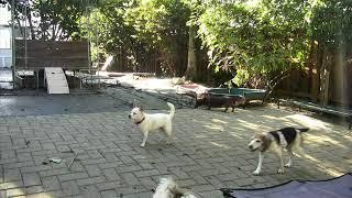 Outside Dog Yard Cam 09-18-2018 14:13:13 - 15:13:14
