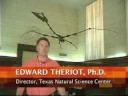 Texas pterosaur