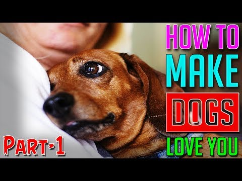 How To Make Dogs Love You || Part-1 || Dog Facts