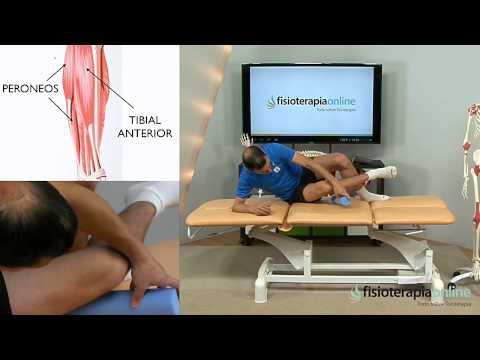 Cómo descargar el tibial anterior con técnica de presión y masaje ...