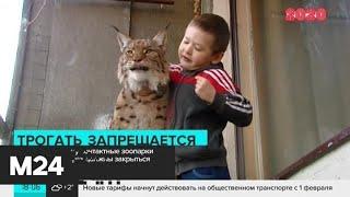 Смотреть видео Новый закон запретил контактные зоопарки в ТЦ - Москва 24 онлайн