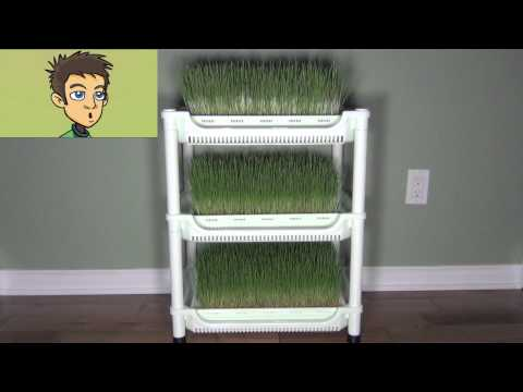 Sproutman's Wheatgrass Grower Demonstration in the Raw Nutrition Kitchen