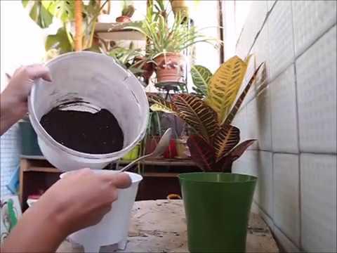 Комнатный цветок лианы виды и фото